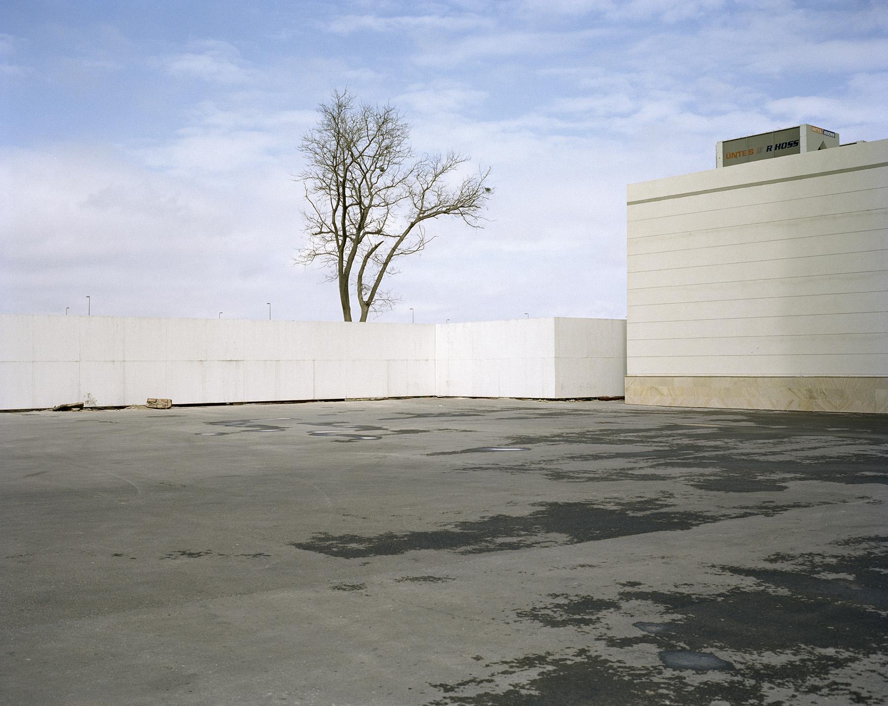 2015 год: Одинокое дерево проглядывает из-за пластиковой ограды — район Кероглу, северо-восток Баку.