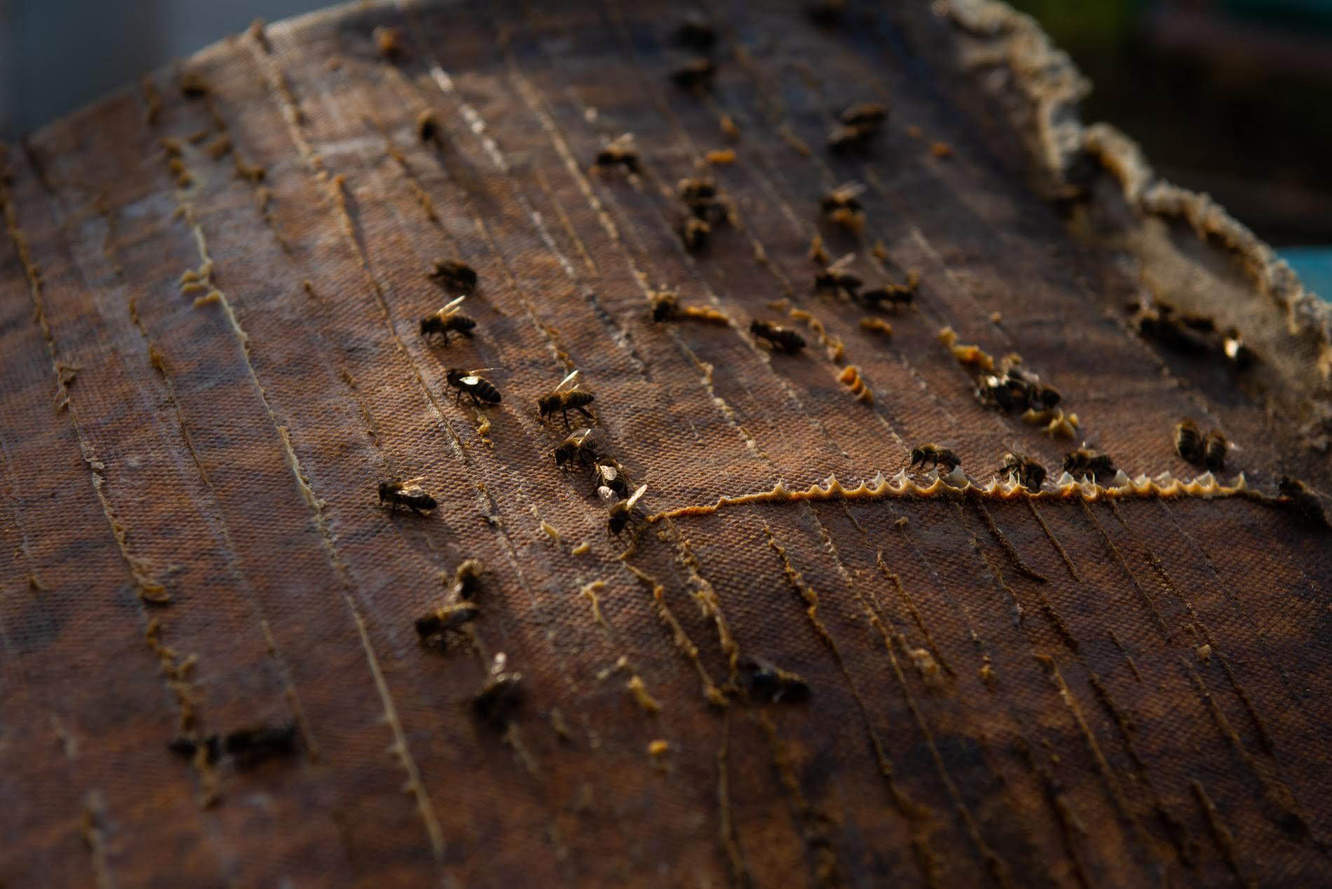 Лали рассказывает, что зимой пчёлам в основном нужна энергия для поддержания тепла в улье. Но когда зима теплая, пчелы выходят раньше, тратят больше энергии и расходуют накопленный мёд. Из-за этого Лали приходится давать им дополнительное питание. Фото: Тамуна Чкареули / OC Media