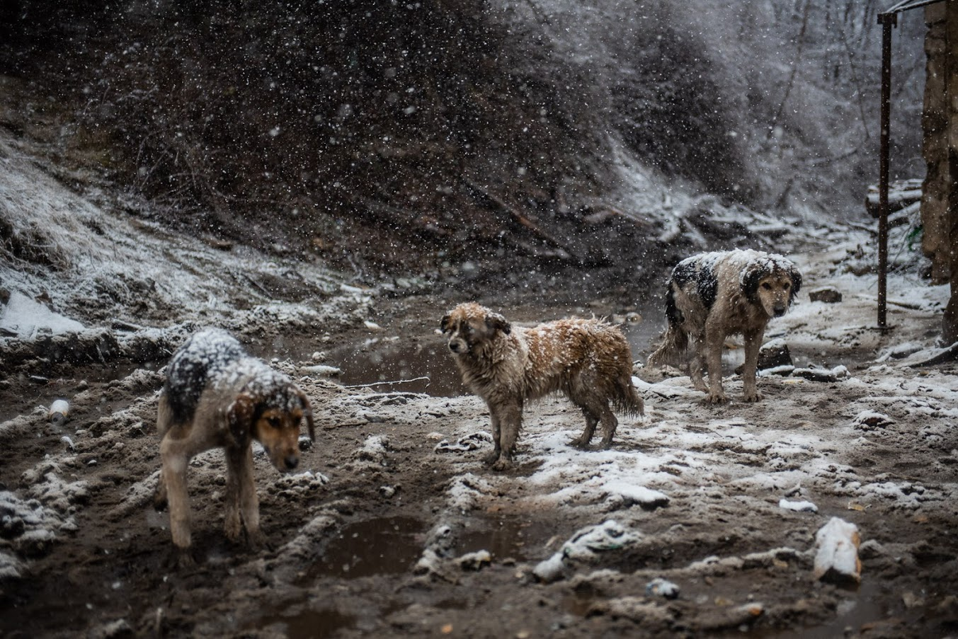 Протестующие за несколько месяцев своей акции приютили и подкармливают несколько бродячих собак. Фото: Мариам Никурадзе/OC Media
